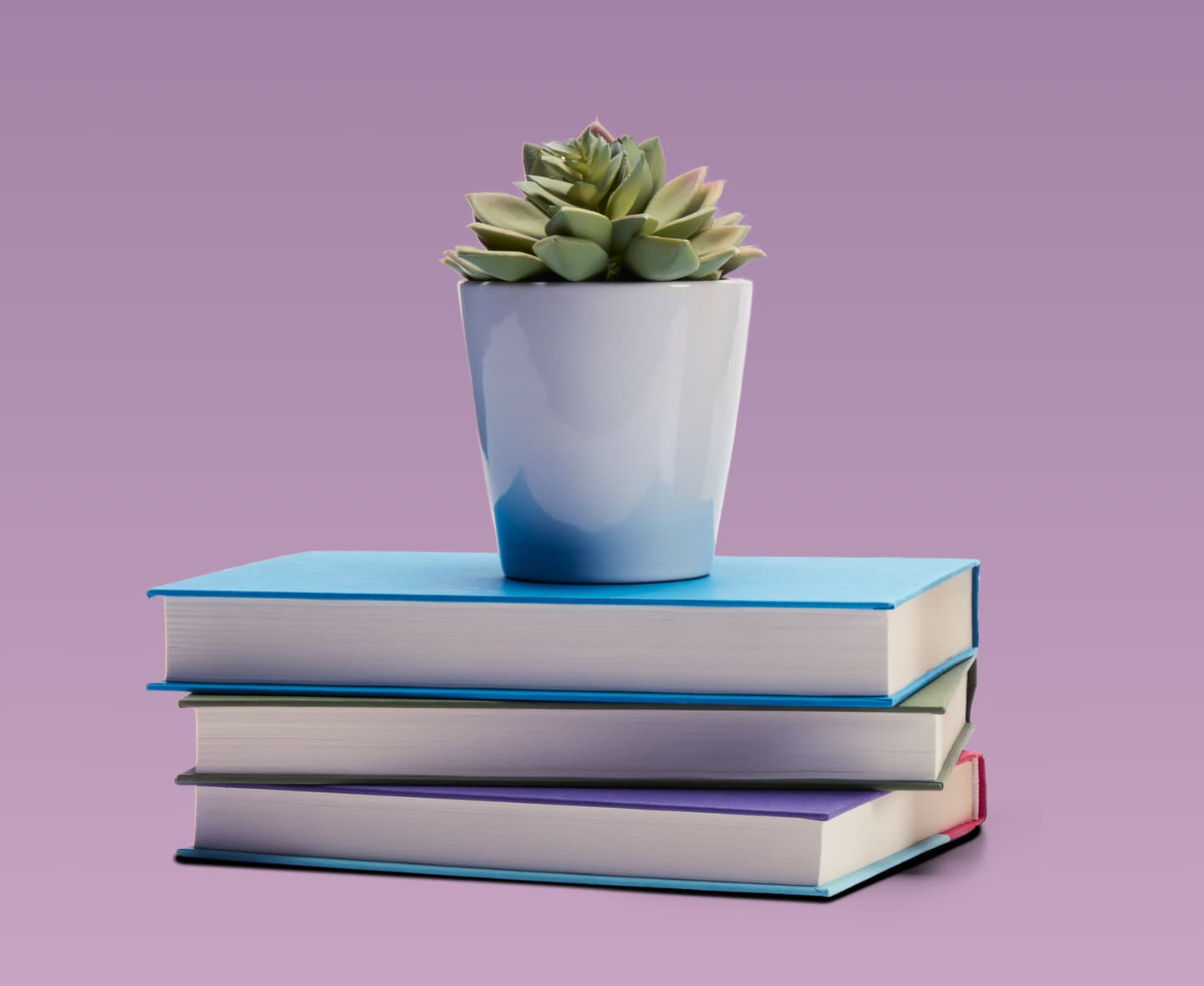 A plant and a few books